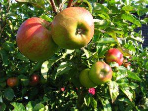 appelboom1